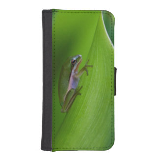 USA, Georgia, Savannah, Tiny Frog On A Leaf Phone Wallet Cases