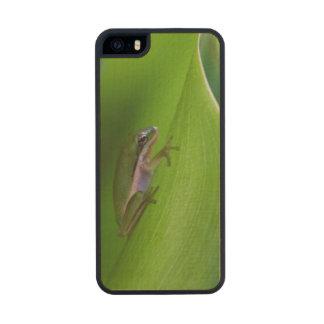 USA, Georgia, Savannah, Tiny Frog On A Leaf Carved® Maple iPhone 5 Case