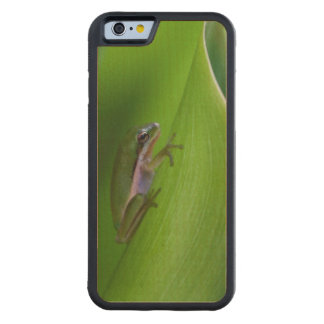 USA, Georgia, Savannah, Tiny Frog On A Leaf Carved® Maple iPhone 6 Bumper