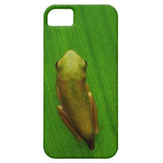 USA, Georgia, Savannah, Tiny Frog On Leaf iPhone 5 Cover