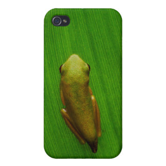 USA, Georgia, Savannah, Tiny Frog On Leaf Cases For iPhone 4