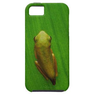 USA, Georgia, Savannah, Tiny Frog On Leaf iPhone SE/5/5s Case