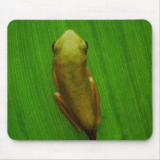 USA, Georgia, Savannah, Tiny Frog On Leaf Mouse Pad
