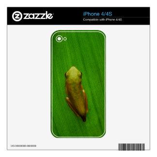 USA, Georgia, Savannah, Tiny Frog On Leaf iPhone 4S Decal