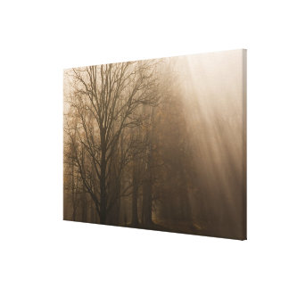 USA Great Smoky Mountain NP Tennessee trees in Canvas Print