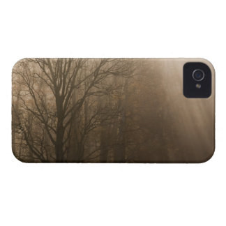 USA Great Smoky Mountain NP Tennessee trees in Case-Mate iPhone 4 Case