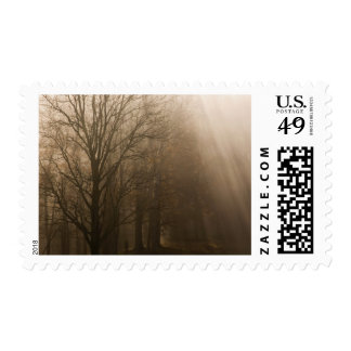 USA Great Smoky Mountain NP Tennessee trees in Stamp