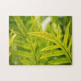 USA, Hawaii, Big Island. Tropical Green Fern Jigsaw Puzzle