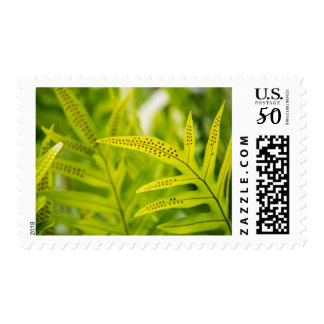 USA, Hawaii, Big Island. Tropical Green Fern Postage