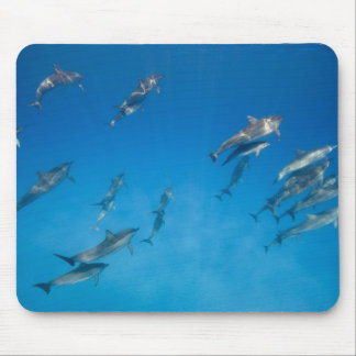 USA, Hawaii, Big Island, Underwater view of 2 Mouse Pad