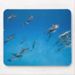 USA, Hawaii, Big Island, Underwater view of 2 Mousepads
