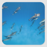 USA, Hawaii, Big Island, Underwater view of 2 Square Stickers