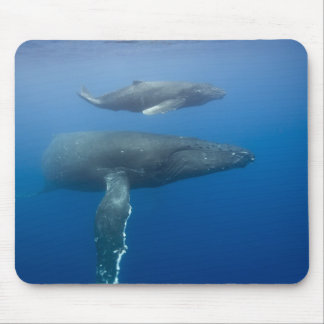 USA, Hawaii, Big Island, Underwater view of Mouse Pad