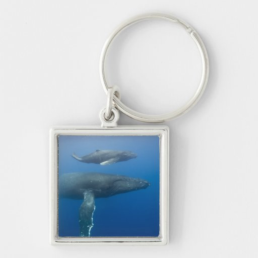USA, Hawaii, Big Island, Underwater view of Silver-Colored Square Keychain