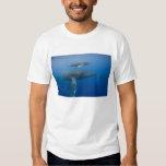 USA, Hawaii, Big Island, Underwater view of T Shirt
