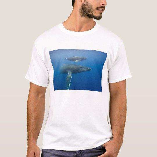 USA, Hawaii, Big Island, Underwater view of T-Shirt
