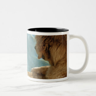USA, Hawaii, Honolulu. Two-Tone Coffee Mug