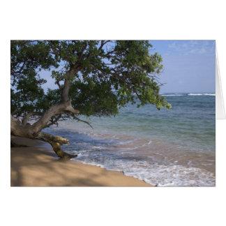 USA, Hawaii, Kauai, beach scenic. RF) Card