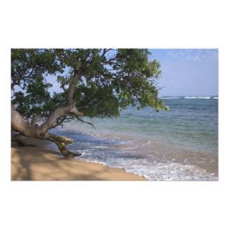 USA, Hawaii, Kauai, beach scenic. RF) Photo Print