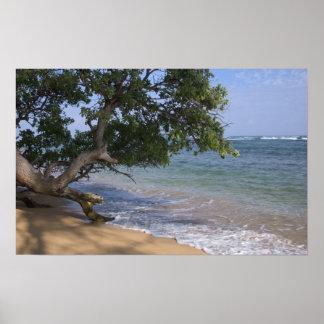 USA, Hawaii, Kauai, beach scenic. RF) Poster