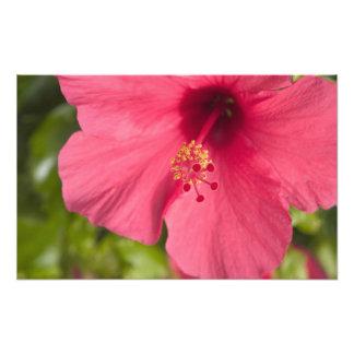 USA, Hawaii, Kauai, Hibiscus Art Photo