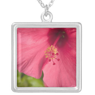 USA, Hawaii, Kauai, Hibiscus Silver Plated Necklace
