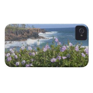 USA, Hawaii, Kauai, near Kapaa, northwest Blackberry Cases
