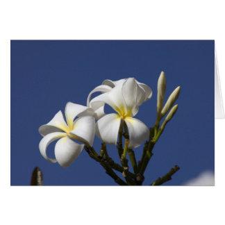USA, Hawaii, Kauai, white plumeria. Card