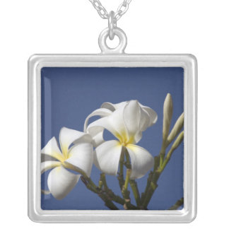 USA, Hawaii, Kauai, white plumeria. Silver Plated Necklace