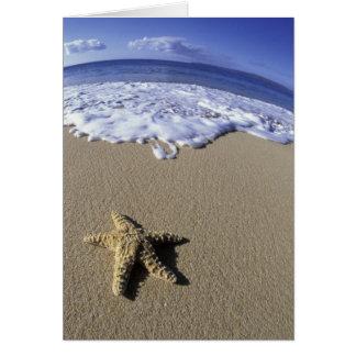 USA, Hawaii, Maui, Makena Beach, Starfish and Card