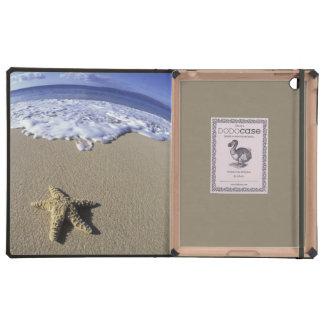 USA Hawaii Maui Makena Beach Starfish and
