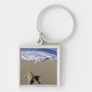 USA, Hawaii, Maui, Makena Beach, Starfish and Keychain