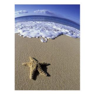 USA, Hawaii, Maui, Makena Beach, Starfish and Postcard