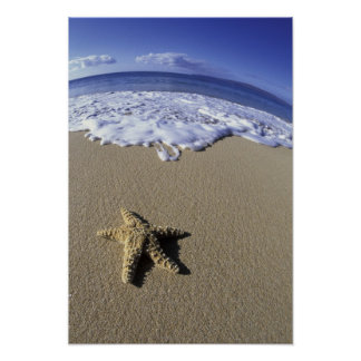 USA, Hawaii, Maui, Makena Beach, Starfish and Poster