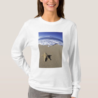 USA, Hawaii, Maui, Makena Beach, Starfish and T-Shirt
