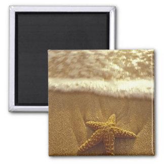 USA, Hawaii, Maui, Maui, Kihei, Starfish and Magnet