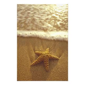 USA, Hawaii, Maui, Maui, Kihei, Starfish and Photo Art
