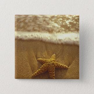 USA, Hawaii, Maui, Maui, Kihei, Starfish and Pinback Button