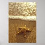 USA, Hawaii, Maui, Maui, Kihei, Starfish and Posters