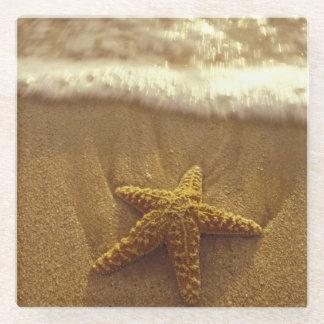 USA, Hawaii, Maui, Maui, Kihei, Starfish Glass Coaster