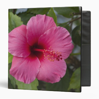 USA, Hawaii, Oahu. The Hibiscus is the 2 3 Ring Binder