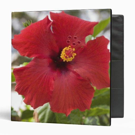 USA, Hawaii, Oahu. The Hibiscus is the Vinyl Binders