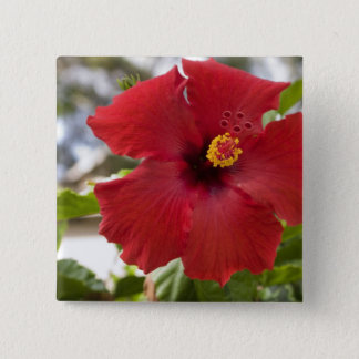 USA, Hawaii, Oahu. The Hibiscus is the Button