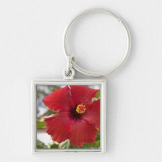 USA, Hawaii, Oahu. The Hibiscus is the Keychain