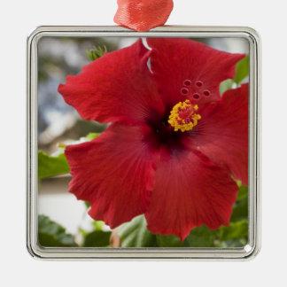 USA, Hawaii, Oahu. The Hibiscus is the Metal Ornament