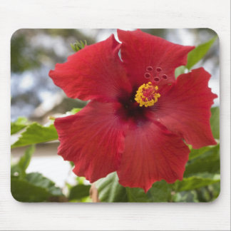 USA, Hawaii, Oahu. The Hibiscus is the Mouse Pad