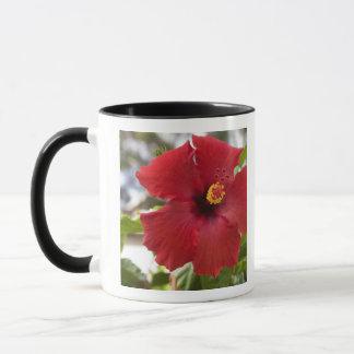 USA, Hawaii, Oahu. The Hibiscus is the Mug