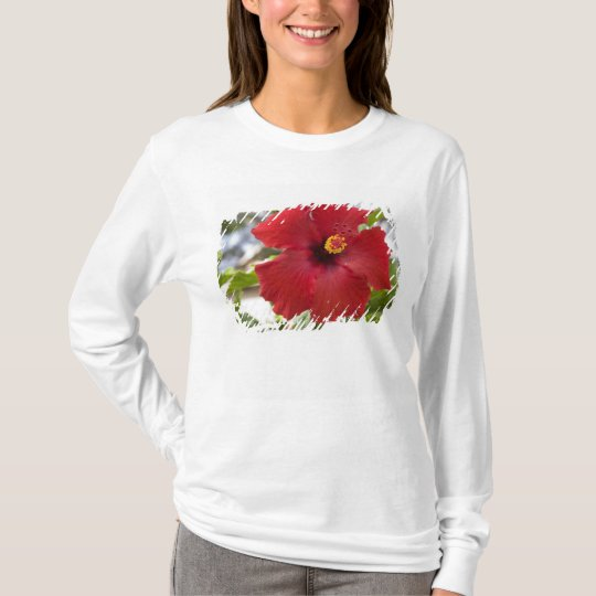 USA, Hawaii, Oahu. The Hibiscus is the T-Shirt