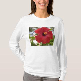 USA, Hawaii, Oahu. The Hibiscus is the T-Shirt
