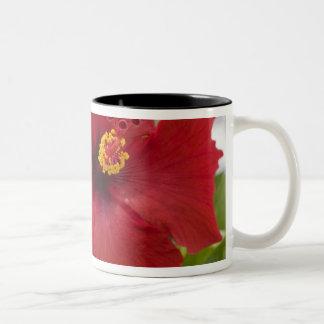 USA, Hawaii, Oahu. The Hibiscus is the Two-Tone Coffee Mug